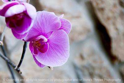 015-flower-dsm-07feb14-203-6577