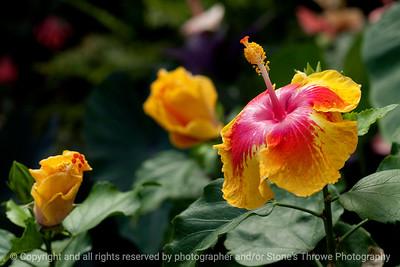 015-flower-dsm-05jul12-003-7179