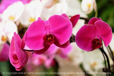 015-flower-dsm-14jan09-09x06-009-300-1177