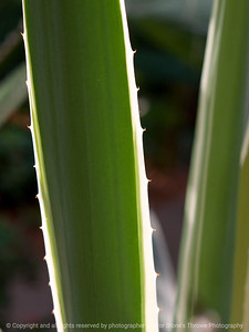 015-cactus-dsm-05jul12-001-7152