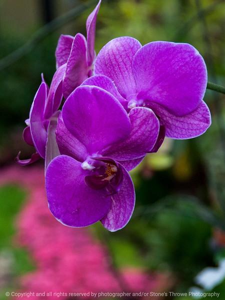 015-flower_lily-dsm-07feb14-001-6606
