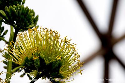 015-botanical-dsm-19dec13-6160