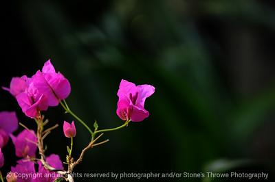 015-flower-dsm-14jan09-1200