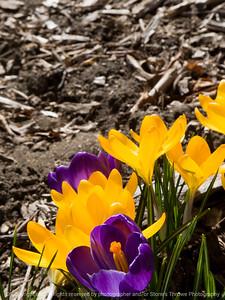 015-flower-dsm-09mar12-001-4129