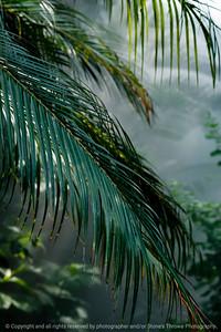 015-leaf-dsm-05jul12-7213