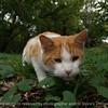 015-cat-dallas_co-26sep05-8286
