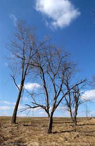 015-tree-dallas_co-18feb05-6568