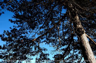 015-tree-clayton_cemetery_dallas_co-27feb06-c1-9173