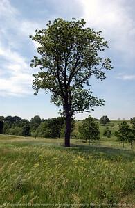 015-tree-dallas_co-08jun06-9420