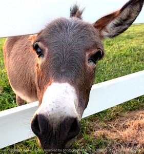 015-burro-waukee-10sep04-c1-0074