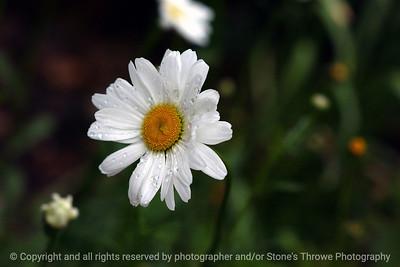 015-flower-dsm-18may05-09x06-009-300-7517