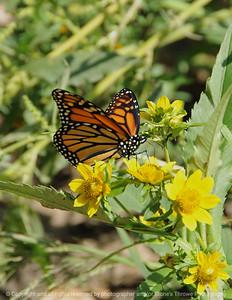 015-butterfly-dsm-15sep08-cvr-0169