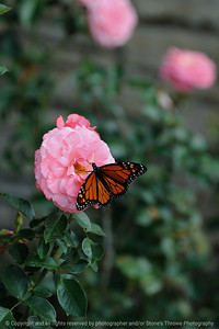 015-butterfly-dsm-27sep08-0466