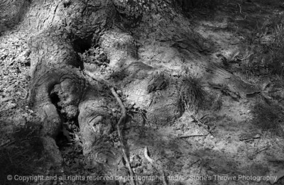 015-tree_roots_shadows-dsm-04may05-bw-7289