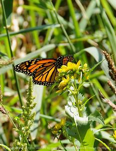 015-butterfly-dsm-15sep08-cvr-0158