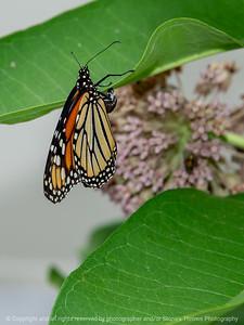 015-butterfly-dsm-22jun18-09x12-001-300-5601