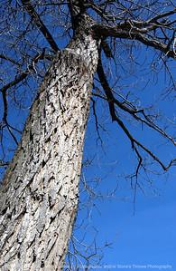 015-tree-dsm-11jan06-9021