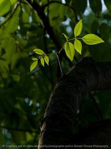 015-leaf-wdsm-08jul16-09x12-001-0195