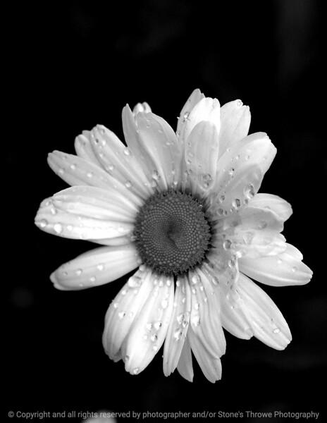 015-flower-dsm-18may05-bw-cvr-7516