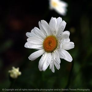 015-flower-dsm-18may05-03x03-009-300-7517
