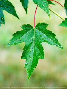 015-leaf-dsm-22jun17-09x12-001-9691