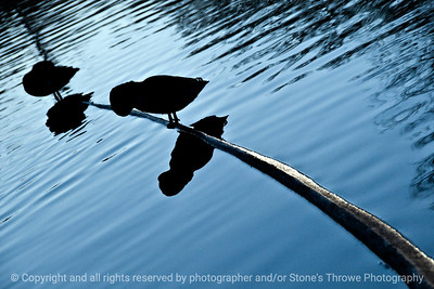 015-silhouette_duck_sunset-dsm-28nov11-003-2314