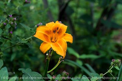 015-flower-dsm-27jul16-18x12-003-4935