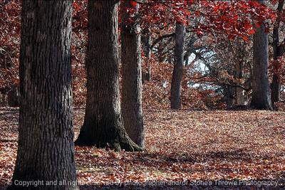 015-autumn_trees-dsm-07nov05-c1-8781