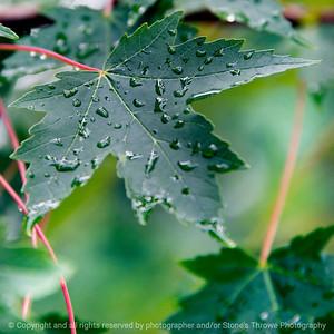 015-leaf-dsm-22jun17-09x09-006-9685