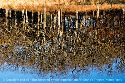 015-tree_reflection-dsm-28nov11-003-2345