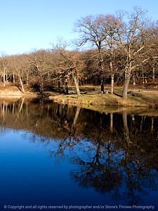 015-tree_reflection-dsm-28nov11-001-2341