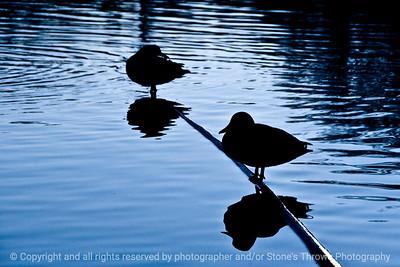 015-silhouette_duck_sunset-dsm-28nov11-003-2311