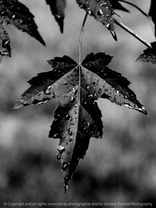 015-leaf-dsm-22jun17-09x12-231-bw-9691