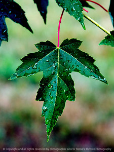 015-leaf-dsm-22jun17-09x12-201-9691