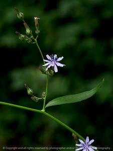 015-flower-dsm-23aug18-09x12-001-300-7196