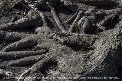 015-tree_roots-ankeny-23apr18-12x08-008-500-4005