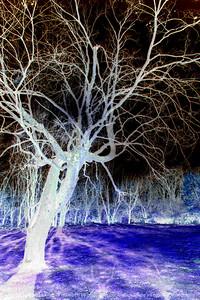 015-trees-ankeny-08nov17-08x12-208-500-2640