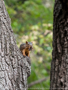 squirrel-ankeny-08oct15-09x12-001-5513