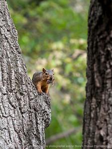 squirrel-ankeny-08oct15-09x12-001-5513