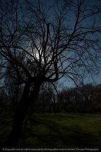 015-trees-ankeny-08nov17-08x12-008-500-2640