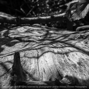 015-shadows-ankeny-30aug19-09x09-006-500-bw-3097