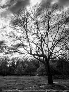 015-tree-ankeny-17apr16-09x12-001-bw-7753