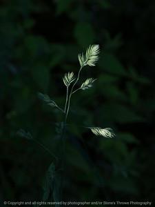 015-grass-ankeny-21may16-09x12-001-9198
