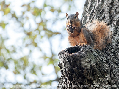squirrel-ankeny-08oct15-12x09-002-5541
