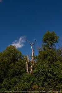 015-tree-ankeny-30aug19-08x12-008-500-3090