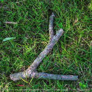 015-tree_branch-ankeny-30aug19-09x09-006-500-3106