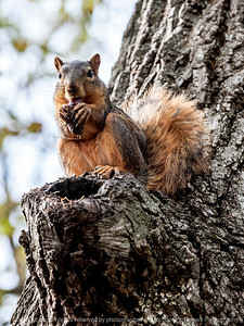 squirrel-ankeny-08oct15-09x12-001-5538
