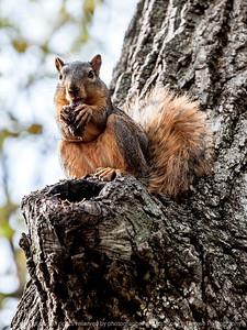 squirrel-ankeny-08oct15-09x12-001-5538