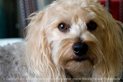 015-dog_cubbo-rockford_ill-16nov11-2025