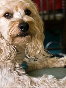 015-dog_cubbo-rockford_ill-16nov11-2022